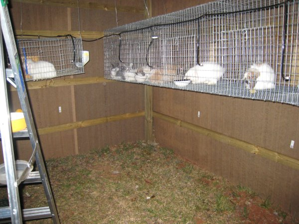 Rabbit cage and rabbit hutch building plans
